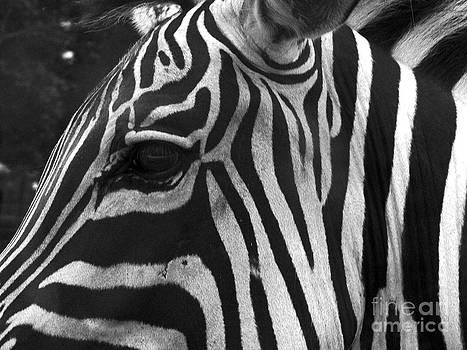 Zebra 2 by Denise Jenks