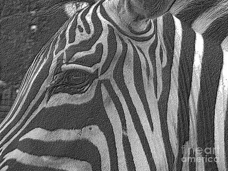 Zebra 3 by Denise Jenks