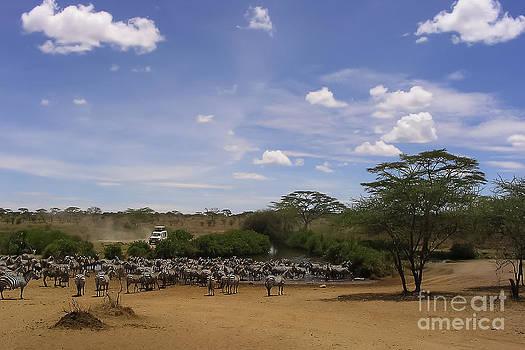 Darcy Michaelchuk - Zebra Herd Takes Over Watering Hole