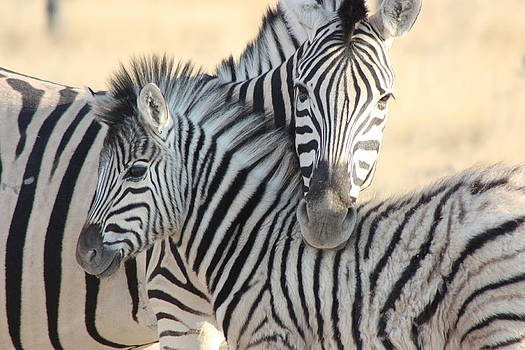 Zebra Hug by Barbara Allm