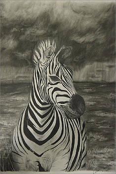Zebra in storm by Casper Venter