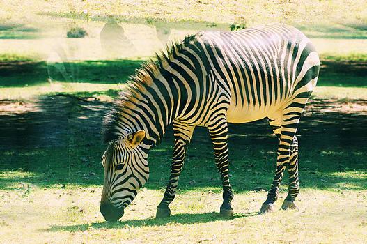 Zebra  by Jaqueline Briel
