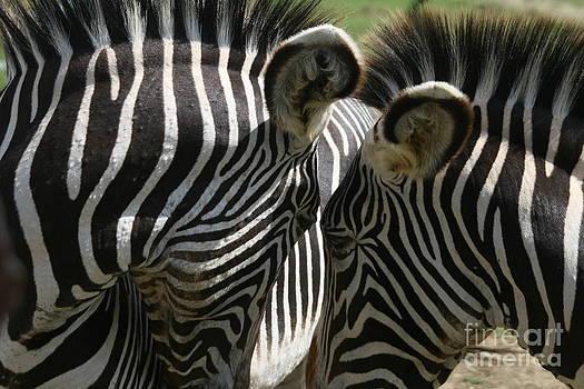 Zebra Lovers by Carol Wright