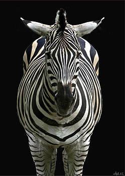 Zebra Point Blank by Stephen EIS
