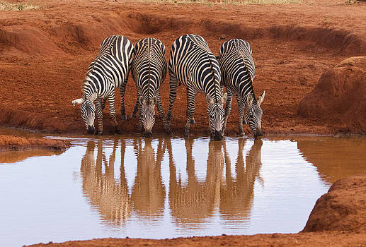 Howard Kennedy - Zebra Reflections