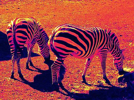 Zebras by Andrea Dale