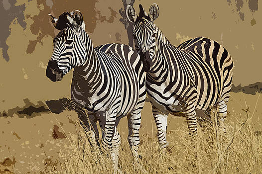 Zebras by Bruce Colin