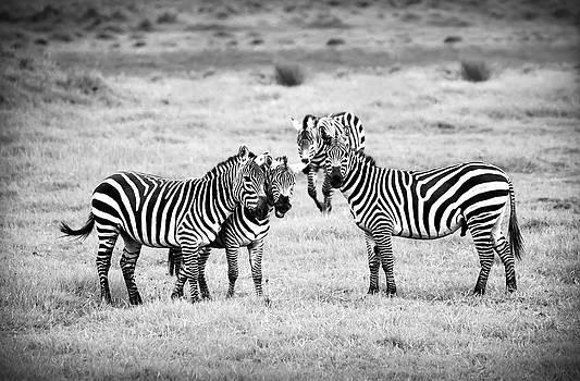 Sebastian Musial - Zebras in Black and White