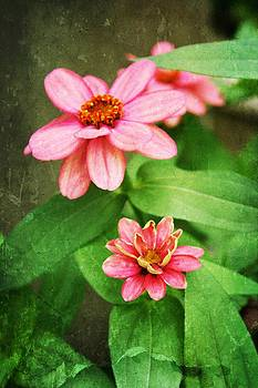 Zinnia Flowers by Cathie Tyler