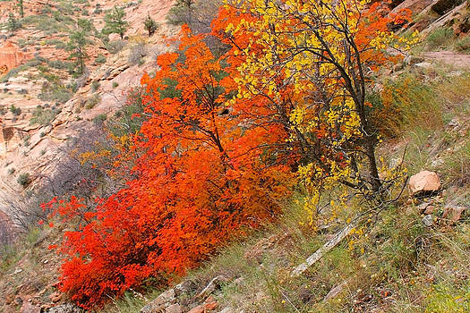 Zion Red by Sharon I Williams