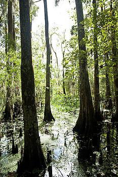 Jean La Fitte Swamp by Gary  Taylor