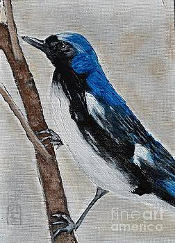 Black Throated Blue Warbler by Holly Donohoe