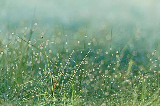 Drops by Daniel Kulinski