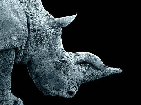 King rhino by Francis Erevan