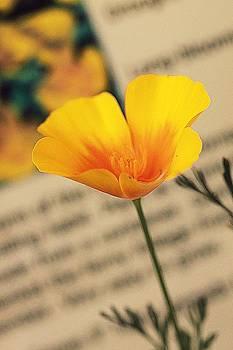 Poppy by Amy Neal