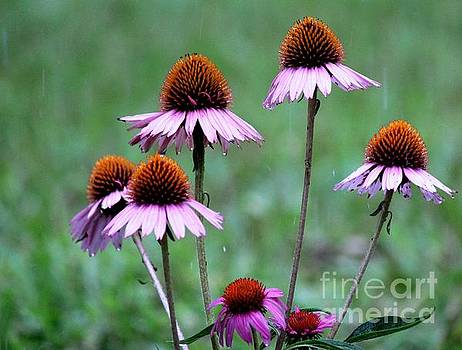 Purple Coneflowers in the Rain by Theresa Willingham