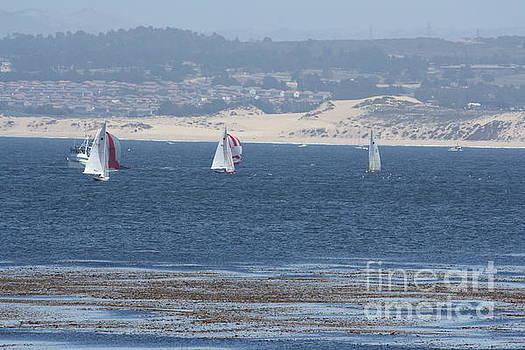 Sailing by Lea Cypert