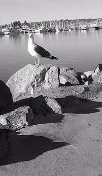 Sea Gull by Catherine Kurchinski