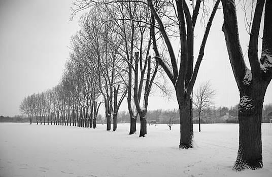 Snow in Donnington by Bakhtiar Umataliev