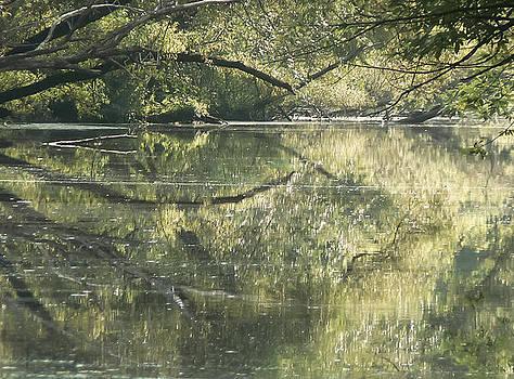 Swamp by Michelle Dennis
