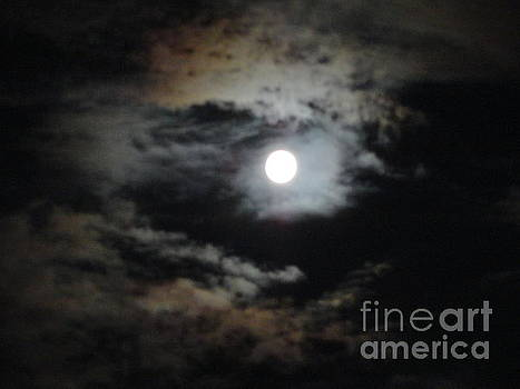 The Light of the Moon by Tammy Arne