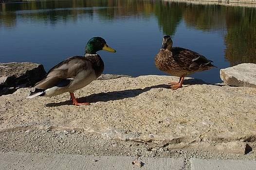 Two Ducks by Anna Villarreal Garbis