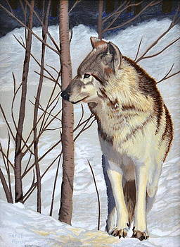 Winter Wolf by Margaret Sarah Pardy