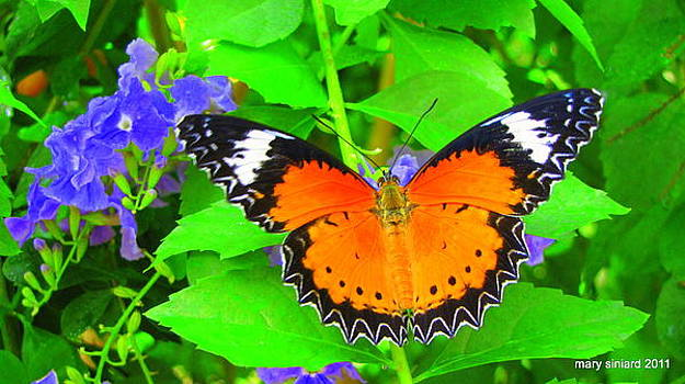 Orange Butterfly by Mary Siniard