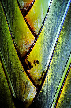 Palm Leaves by Frank DiGiovanni