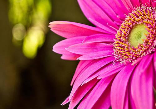 Pink Flower by Norchel Maye Camacho