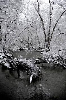 Winter Storm by Frank DiGiovanni