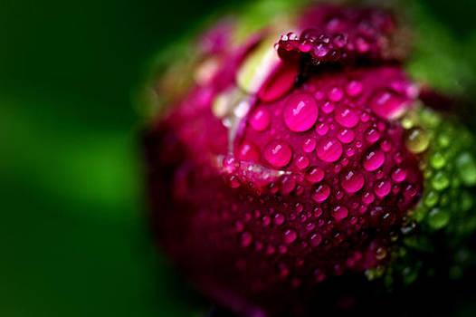 Pianese Flower by Frank DiGiovanni