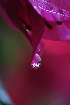 A Drop Of Deep Pink by Louise Mingua
