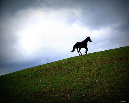 A free Spirit by Amanda Shingleton