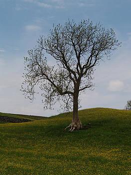 A Keld Tree by Steve Watson