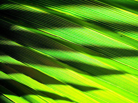 A Shadow of a Palmfrond on a Palmfrond by Catherine Natalia  Roche