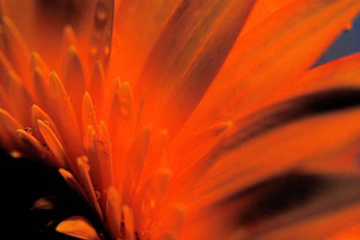Ablaze by Wendy Riley- Athans