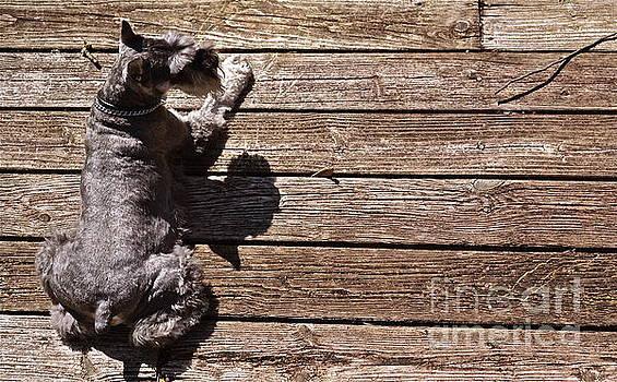 Above Dog by Arthur Hofer