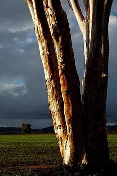 Aglow by Lee Stickels