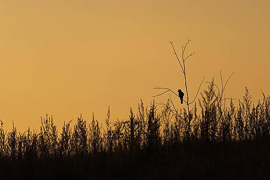 Alone by Daniel Kulinski