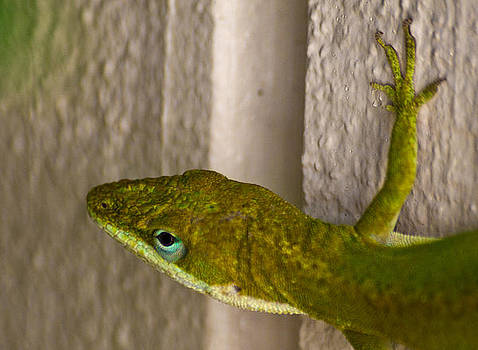 Anole Close Up by Justin Ellis
