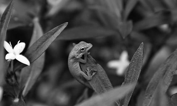 Anole on grass by Justin Ellis