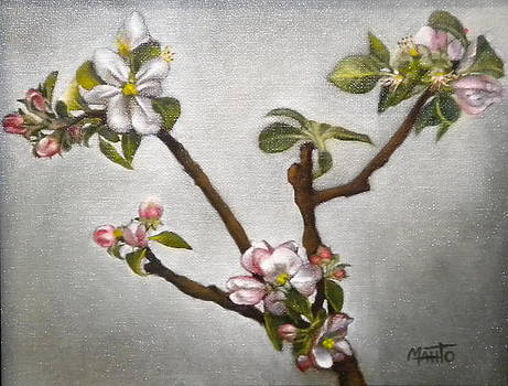 Apple Blossoms by Mahto Hogue