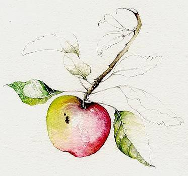 Apple  by Karen  Colenso