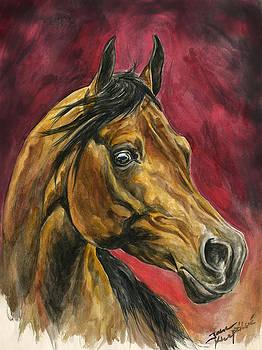 Arabian in red by Jana Goode