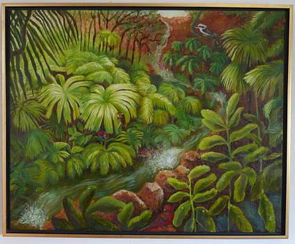Australian Rain Forrest by Lila Strong