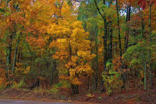Autumn Dreams by James Corley