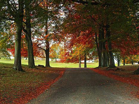 Autumn in Studley Deer Park by Steve Watson