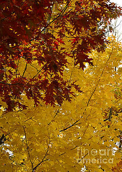 Autumn Oak by Whispering Feather Gallery