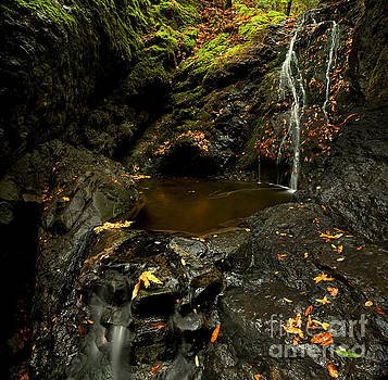 Autumn Rainforest Waterfall by Matt Tilghman